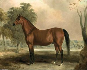 Bertrand, by Sir Archy