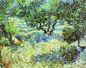 Olive Grove: Bright Blue Sky