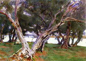 Olive Trees, Corfu