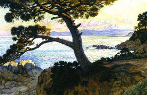 Pine at La Fossette, Sunset
