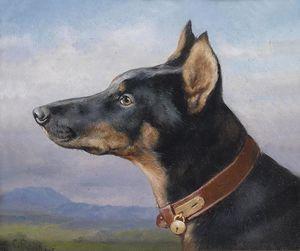 Portrait eines Dobermann