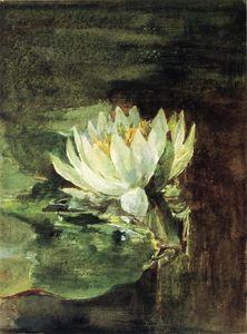 Singolo Water-Lily in la luce del sole