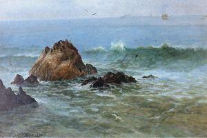 密封 石头  对  太平洋  滨  加利福尼亚