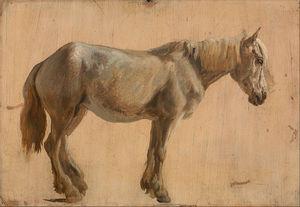 estudio de a Gris  caballo