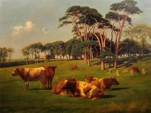 Cattle & Sheep In Pasture