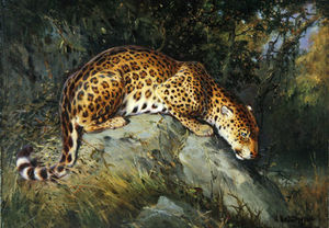 A Leopard Crouching On A Rock