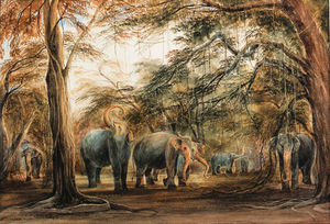 A Herd Of Elephants, Ceylon