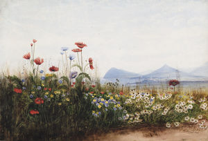 Poppies, Cornflowers And Daisies On Killiney Hill; Killiney Bay, Bray Head And The Sugar Loaf Mountain In The Distance