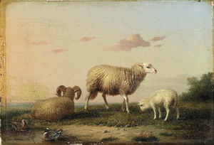 A Family Of Sheep