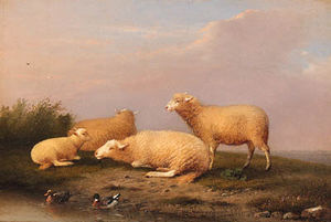 Sheep And Ducks On A Riverbank