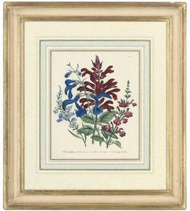 Flower Studies From The Ladies' Flower-garden Of Ornamental Annuals