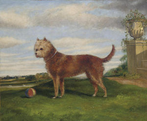 A Terrier With A Ball In An Extensive Landscape