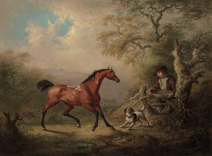 A Groom Offering A Feeding Sieve To A Bay Pony, In A Wooded Landscape