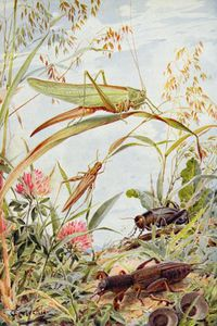 Musical Insects