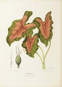 Fleurs, Fruits Et Feuillages Choisis De L' Ile De Java