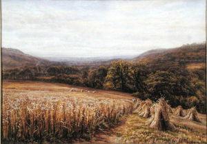 Harvest Time Near Ashburton