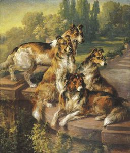 Collie Dogs In Formal Garden