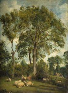 景观带 羊