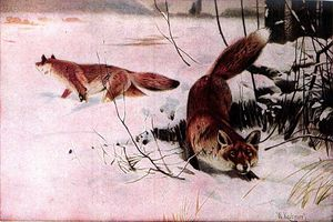 Drawing Of Two Red Foxes In A Snowy Field