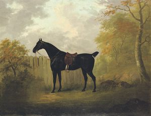 A Saddled Bay Hunter By A Fence, In A Wooded Landscape
