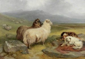 Highland Landscape With Sheep And Dogs