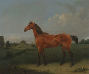 A Bay Horse In A Field
