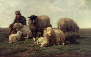 Group Of Belgian Sheep