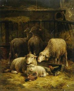 Sheep And Poultry