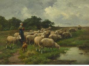 Sheep At Pasture