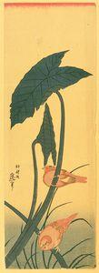 Bird And Plant
