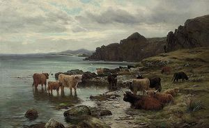 Highland Cattle Watering At A Loch