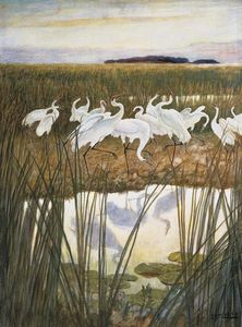 The Dance Of The Whooping Cranes