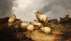 羊で A ハイランド 風景