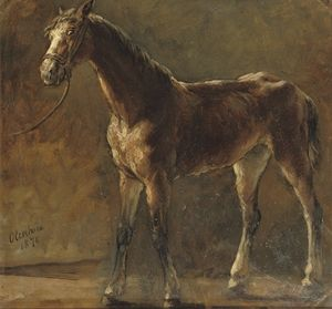 A Brown Foal