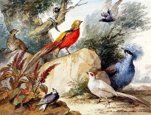 鸟类 风景  阳光