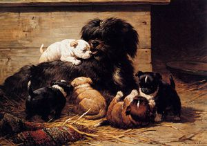 dog with puppies sun