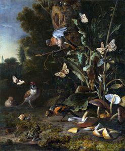 Aves, mariposas y una rana entre Plantas y Hongos