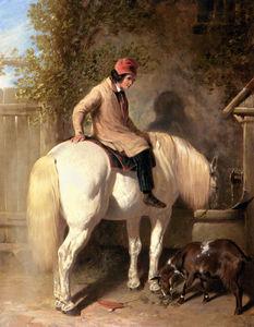 refreshment a boy watering his grey pony