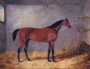 the duke of graftons bolivar in a stable