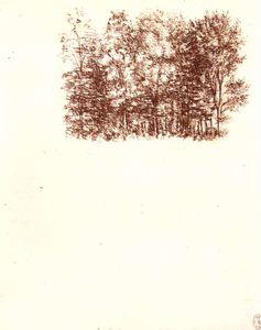 nature studies-Birch copse