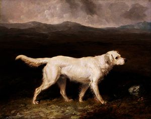 Charles Brett's White English Setter 'Sam'