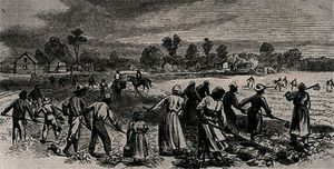 Labour in the Cotton Fields