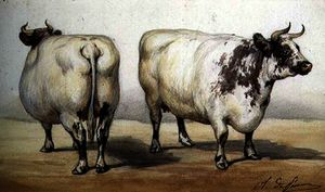 Study of two long-horned cows