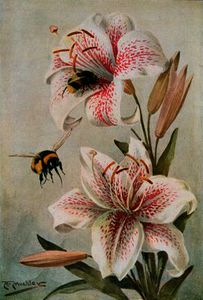 Bees and Lilies