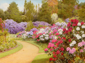The rhododendron walk