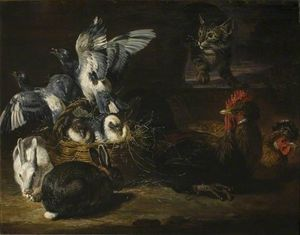 Poultry and Cat