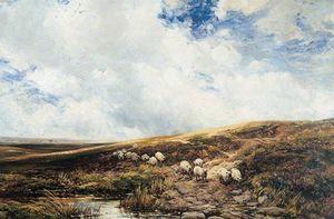 Sheep on the Fells