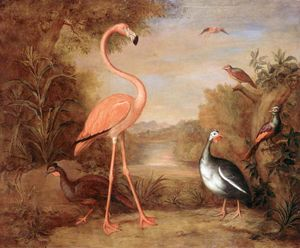 Various Types of Birds (with a Flamingo)
