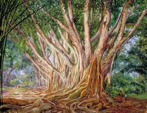 Allee von indischem gummibäume bei peradeniya , Ceylon