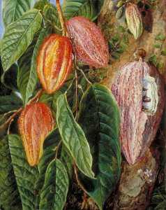 blumen und früchte von dem Kakao Baum , Gemalt auf Singapur